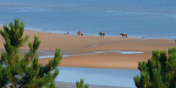 Cote fleurie_chevaux sur la plage